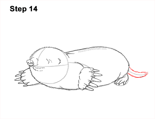 How to Draw a Common European Mole Side 14