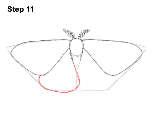 How to Draw an Emperor Moth Wings Insect 11