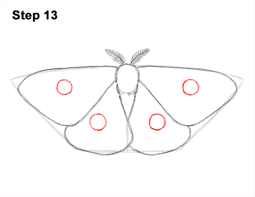 How to Draw an Emperor Moth Wings Insect 13
