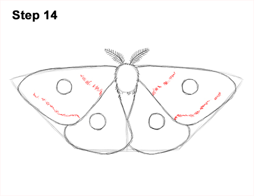 How to Draw an Emperor Moth Wings Insect 14