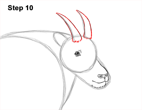 How to Draw a White Rocky Moutain Goat 10