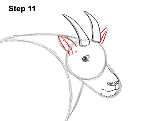 How to Draw a White Rocky Moutain Goat 11