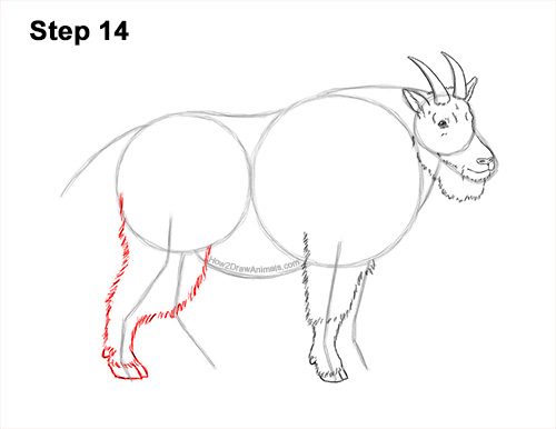 How to Draw a White Rocky Moutain Goat 14