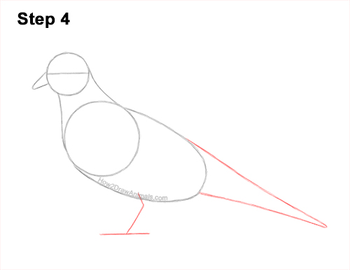 How to Draw a Mourning Dove Bird Pigeon 4