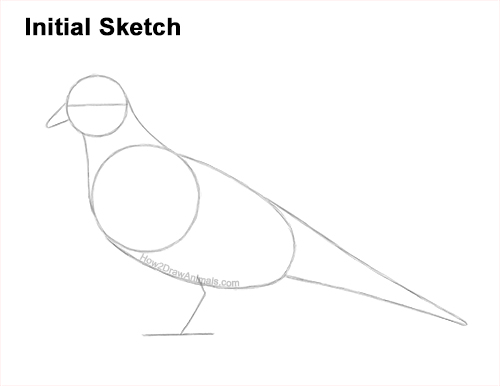 How to Draw a Mourning Dove Bird Pigeon Guides Lines