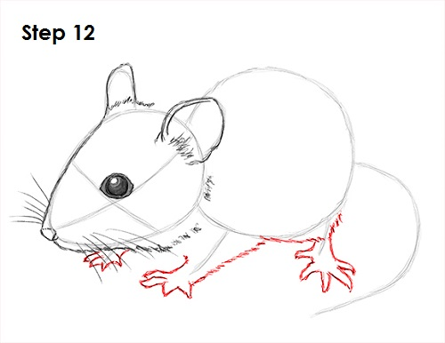 Draw Mouse 12