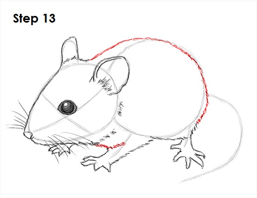 Draw Mouse 13