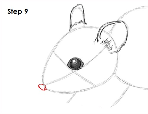 Draw Mouse 9