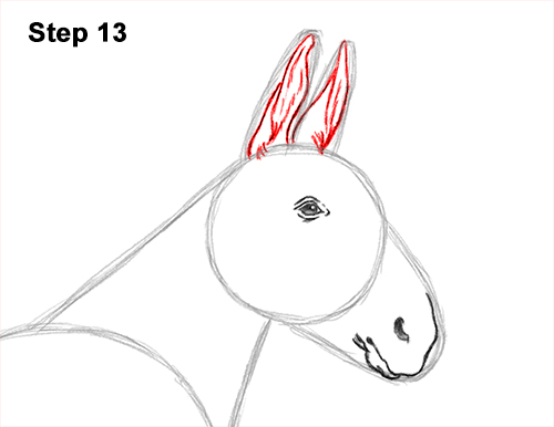 How to Draw a Mule Horse Donkey Side View 13