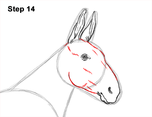 How to Draw a Mule Horse Donkey Side View 14