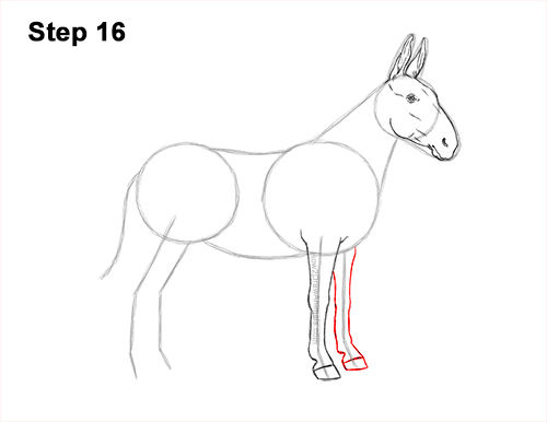 How to Draw a Mule Horse Donkey Side View 16