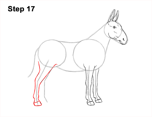 How to Draw a Mule Horse Donkey Side View 17