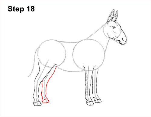 How to Draw a Mule Horse Donkey Side View 18