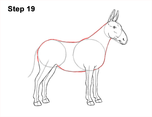 How to Draw a Mule Horse Donkey Side View 19