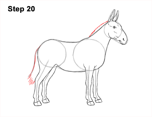 How to Draw a Mule Horse Donkey Side View 20