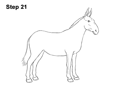 How to Draw a Mule Horse Donkey Side View 21
