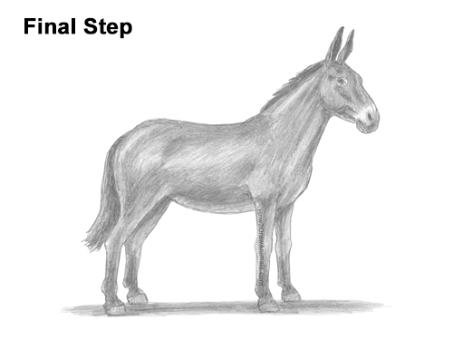How to Draw a Mule Horse Donkey Side View