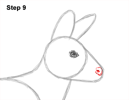 How to Draw a Siberian Musk Deer Fangs Teeth 9