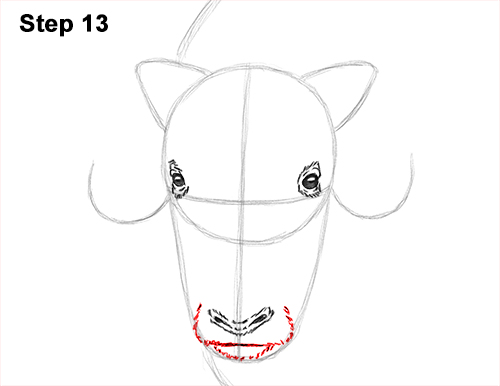 How to Draw Musk Ox Standing Horns 13