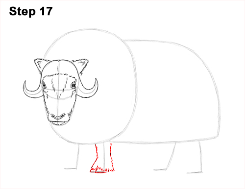How to Draw Musk Ox Standing Horns 17