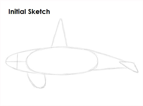 Draw Orca Initial Sketch