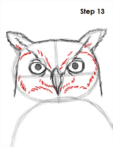 Draw Great Horned Owl 13