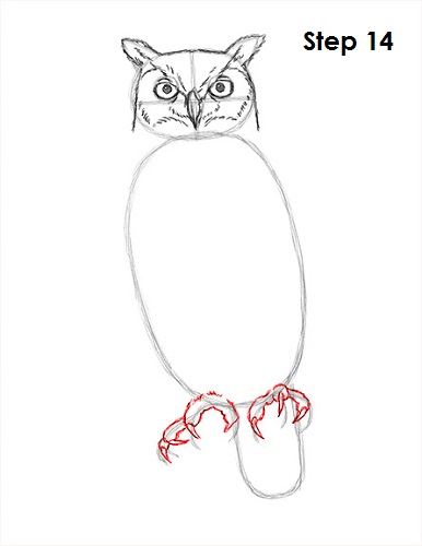 Draw Great Horned Owl 14