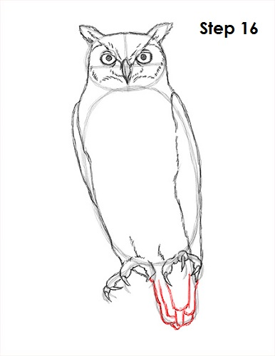 Draw Great Horned Owl 16