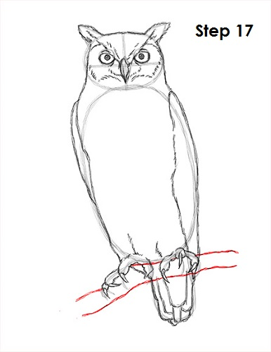 Draw Great Horned Owl 17