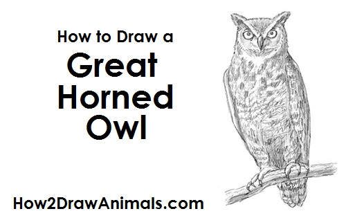Draw Great Horned Owl