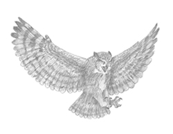 How to Draw a Great Horned Owl Flying Hunting Raptor Bird