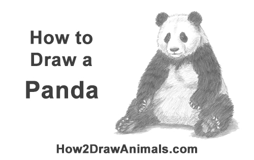 How to Draw Cute Giant Panda Bear Sitting