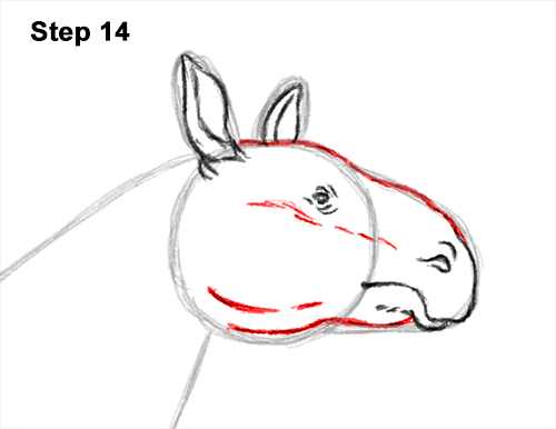 How to Draw a Paraceratherium Indricotherium 14