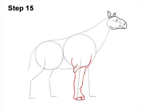 How to Draw a Paraceratherium Indricotherium 15