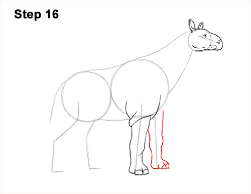How to Draw a Paraceratherium Indricotherium 16