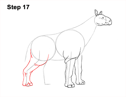 How to Draw a Paraceratherium Indricotherium 17