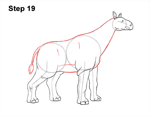How to Draw a Paraceratherium Indricotherium 19