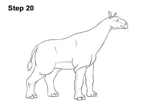How to Draw a Paraceratherium Indricotherium 20