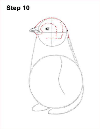 How to Draw a Cute Emperor Penguin Baby Chick 10