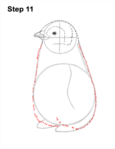How to Draw a Cute Emperor Penguin Baby Chick 11
