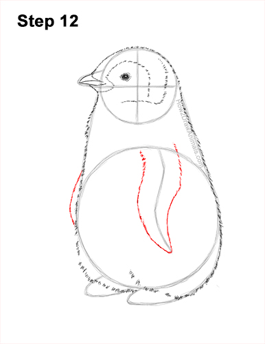 How to Draw a Cute Emperor Penguin Baby Chick 12
