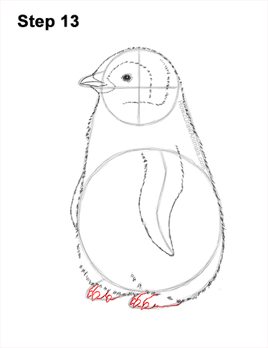 How to Draw a Cute Emperor Penguin Baby Chick 13