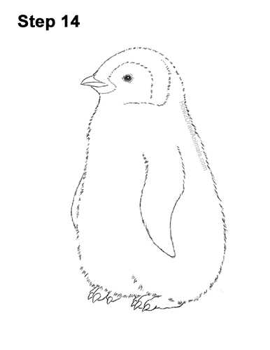 How to Draw a Cute Emperor Penguin Baby Chick 14