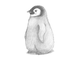 How to Draw a Cute Baby Emperor Penguin Chick
