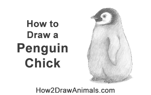 How to Draw a Cute Emperor Penguin Baby Chick
