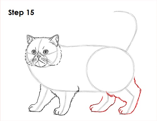 Draw Persian Cat 15