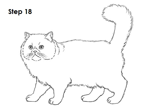 Draw Persian Cat 18