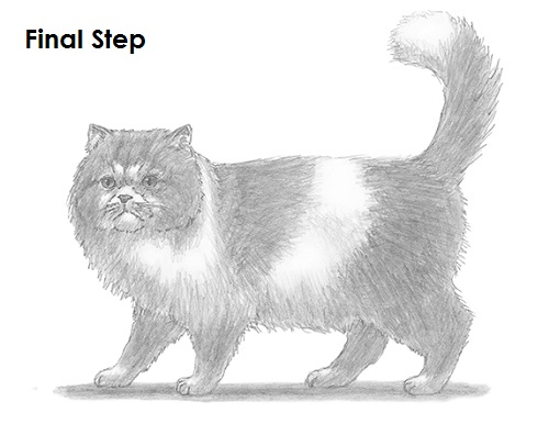 Draw Persian Cat Final