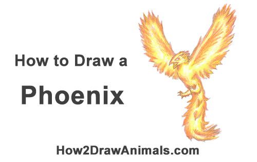 How to Draw a Phoenix
