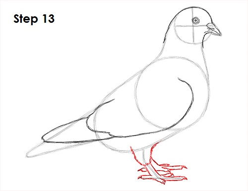 Draw Pigeon Bird 13